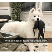 Memes, 🤖, and Them: Well, someone's found his favourite toy Follow @cuteandfuzzybunch for them fuzzy memes!