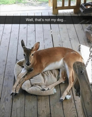 Funny, Animal, and Pictures: Well, that's not my dog Funny Animal Pictures Of The Day 23 Pics