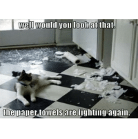 Memes, 🤖, and Looking: well would you look at that.  the paper towels are fighting again O are they :)