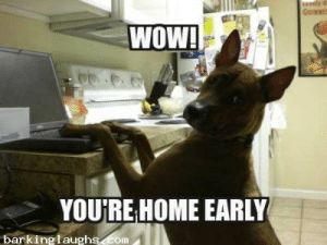 12 Epic and Hilarious Dog Memes to Make you Smile!   Barking Laughs: wely  GUINNES  WOW!  YOURE HOME EARLY  barkinglaughs.com 12 Epic and Hilarious Dog Memes to Make you Smile!   Barking Laughs