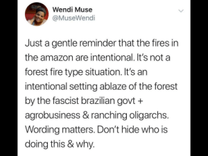 Amazon, Dank, and Fire: Wendi Muse  @MuseWendi  Just a gentle reminder that the fires in  the amazon are intentional. It's not a  forest fire type situation. It's an  intentional setting ablaze of the forest  by the fascist brazilian govt +  agrobusiness & ranching oligarchs.  Wording matters. Don't hide who is  doing this & why. The Amazon burning isn't accidental by sayknow MORE MEMES