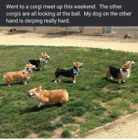 """SWIPE ➡️ """"Corgi Meet Up"""" - OK 👍 