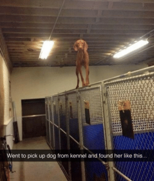 Half dog, half cat, Cat-Dog! via /r/funny https://ift.tt/2PcLPpB: Went to pick up dog from kennel and found her like this... Half dog, half cat, Cat-Dog! via /r/funny https://ift.tt/2PcLPpB