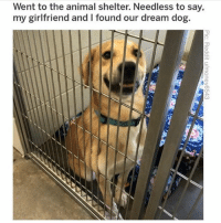 Cute, Funny, and Memes: Went to the animal shelter. Needless to say,  my girltfriend and I found our dream dog.  3 @drsmashlove has cute memes