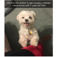 Cute, Memes, and Home: Went to the shelter to get a puppy, instead I  came home with 7-year-old Tofu Just a bunch of cute lil puppers | @cuteandfuzzybunch