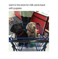 Funny, Puppies, and Milk: went to the store for milk came back  with puppies @chillblinton always makes me laugh