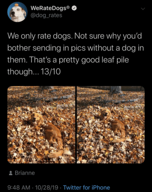 leaf: WeRateDogs®  @dog_rates  We only rate dogs. Not sure why you'd  bother sending in pics without a dog in  them. That's a pretty good leaf pile  though... 13/10  8 Brianne  9:48 AM · 10/28/19 · Twitter for iPhone