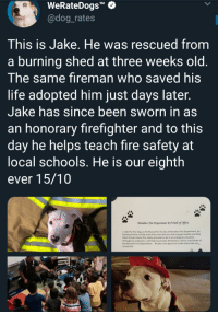 "Fire, Life, and Memes: WeRateDogs""  @dog_rates  TM  This is Jake. He was rescued from  a burning shed at three weeks old  The same fireman who saved his  life adopted him just days later  Jake has since been sworn in as  an honorary firefighter and to this  day he helps teach fire safety at  ocal schools. He is our eighth  ever 15/10  Manahan Fire Department X9 Oath of office  1, Jake the Fire Dog, as the Mascot for the City of Hanahan Fire Department, do  hereby promise to help make kids smile with my charming personality and help  them to learn about fire safety and what to do in an emergency situation  Through my endeavors, I will help to promote the Mission, Vision, and Values of  the Hanahan Fire Department.. No job is too big or too small where kids are  concerned positive-memes:  Brave boy Jake 🐶💪❤"