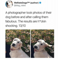 I've been laughing at @thefunnyintrovert's page for the last half hour: WeRateDogsTM (author) +  @dog_rates  A photographer took photos of their  dog before and after calling them  fabulous. The results are h*ckin  shocking. 13/10 I've been laughing at @thefunnyintrovert's page for the last half hour