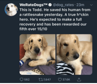 True, Good, and Been: WeRateDogsTM @dog_rates 23m  This is Todd. He saved his human from  a rattlesnake yesterday. A true h*ckin  hero. He's expected to make a full  recovery and has been rewarded our  fifth ever 15/10  562 07,647 37.6K Very, very good boy.