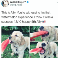Animals, Cute, and Cute Animals: WeRateDogsTM  @dog_rates  This is Alfy. You're witnessing his first  watermelon experience. I think it was a  success·13/10 happy 4th Alfy SWIPE & TAG ❤️ follow me @v.cute.animals 👈👈 @drsmashlove