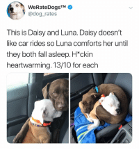 Fall, Memes, and 🤖: WeRateDogsTM  @dog_rates  This is Daisy and Luna. Daisy doesn't  like car rides so Luna comforts her until  they both fall asleep. H*ckin  heartwarming. 13/10 for each Hi