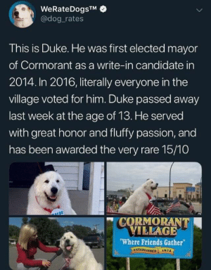 "Great sendoff for Duke, thank you for your service: WeRateDogsTM  @dog rates  This is Duke. He was first elected mayor  of Cormorant as a write-in candidate in  2014. In 2016, literally everyone in the  village voted for him. Duke passed away  last week at the age of 13. He served  with great honor and fluffy passion, and  has been awarded the very rare 15/10  CORMORANT  VILLAGE  ""Where Friends Gather  ESTABLISHED  1874 Great sendoff for Duke, thank you for your service"