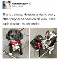 Anaconda, Memes, and Butterfly: WeRateDogsTM  @dog rates  This is Jamesy. He gives a kiss to every  other pupper he sees on his walk. 13/100  such passion, much tender Follow my other accounts @antisocialtv @lola_the_ladypug @x__antisocial_butterfly__x