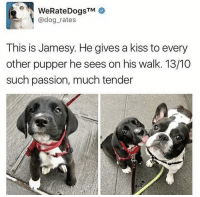 Cute, Kiss, and Thought: WeRateDogsTM  @dog rates  This is Jamesy. He gives a kiss to every  other pupper he sees on his walk. 13/10  such passion, much tender Thought this was cute