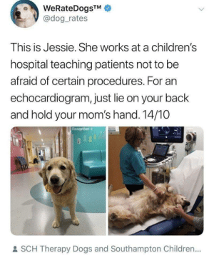 doggos-with-jobs:  Good girl teaches kids there's nothing to be scared of from an EKG: WeRateDogsTM  @dog_rates  This is Jessie. She works at a children's  hospital teaching patients not to be  afraid of certain procedures. For an  echocardiogram, just lie on your back  and hold your mom's hand. 14/10  Reception->  : SCH Therapy Dogs and Southampton Children... doggos-with-jobs:  Good girl teaches kids there's nothing to be scared of from an EKG