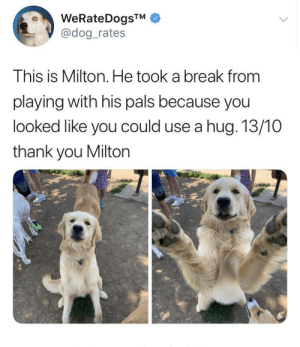 I know twitter screenshots aren't really memes but can we make an exception for Milton who just wants to give you a hug?: WeRateDogsTM  @dog_rates  This is Milton. He took a break from  playing with his pals because you  looked like you could use a hug. 13/10  thank you Milton I know twitter screenshots aren't really memes but can we make an exception for Milton who just wants to give you a hug?