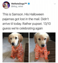 Halloween, Memes, and Lost: WeRateDogsTM  @dog_rates  This is Samson. His Halloween  pajamas got lost in the mail. Didn't  arrive til today. Rather pupset. 13/10  guess we're celebrating again we're bringing back halloween for samson !!! 🎃👻
