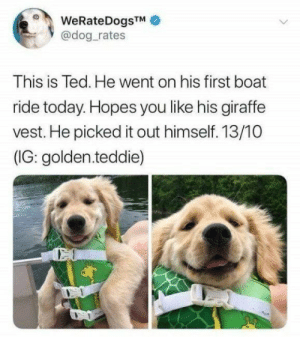 73 Hillarious Images From The Funniest Animals | CutesyPooh #funnypictures: WeRateDogsTM  @dog rates  This is Ted. He went on his first boat  ride today. Hopes you like his giraffe  vest. He picked it out himself. 13/10  (IG: golden.teddie) 73 Hillarious Images From The Funniest Animals | CutesyPooh #funnypictures