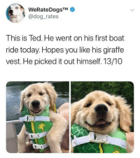 Cute, Funny, and Ted: WeRateDogsTM  @dog_rates  This is Ted. He went on his first boat  ride today. Hopes you like his giraffe  vest. He picked it out himself. 13/10 Holy crap this is cute