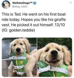 vest: WeRateDogsTM  @dog_rates  This is Ted. He went on his first boat  ride today. Hopes you like his giraffe  vest. He picked it out himself. 13/10  (IG: golden.teddie)  CO