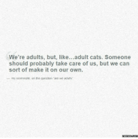 "A perfect explanation of my life.: We're adults, but, like  adult cats. Someone  should probably take care of us, but we can  sort of make it on our own.  my roommate, on the question ""are we adults  memes.com A perfect explanation of my life."