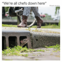 """Funny, Tank, and Sinatra: """"We're all chefs down here""""  @tank.sinatra  ADE WITH MOMUS Itatouille"""