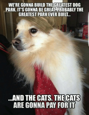 Cats, Dog, and Park: WE'RE GONNA BUILD THEGREATEST DOG  PARK. IT'S GONNA BE GREAT PROBABLY THE  GREATEST PARK EVER BUILT  .AND THE CATS. THE CATS  ARE GONNA PAY FOR LT Así o mas perrón?