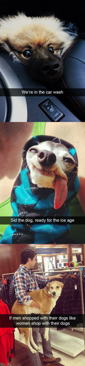 Dogs, Target, and Tumblr: We're in the car wash   Sid the dog, ready for the ice age   If men shopped with their dogs like  women shop with their dogs Dog snapsvia @animalsnaps