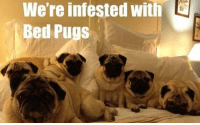 Memes, Pugs, and 🤖: We're infested with L  ed Pugs