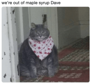 Maple Syrup, Dave, and Maple: we're out of maple syrup Dave