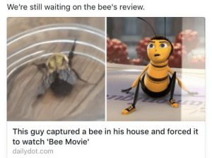 """elphabaforpresidentofgallifrey:What the fuck: We're stil waiting on the bee's review.  This guy captured a bee in his house and forced it  to watch 'Bee Movie""""  dailydot.com elphabaforpresidentofgallifrey:What the fuck"""