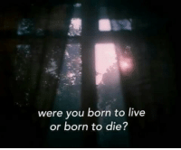 Born to Die, Live, and You: were you born to live  or born to die?