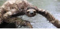 Wet sloths are made of nightmares.