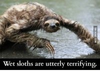 Sloth: Wet sloths are utterly terrifying.