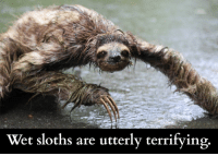 Dank, Sloth, and Today: Wet sloths are utterly terrifying Today is International Sloth Day! Enjoy.