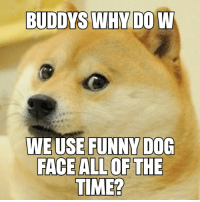 funny dog: WEUSE FUNNY DOG  FACE ALLOF THE  TIME?