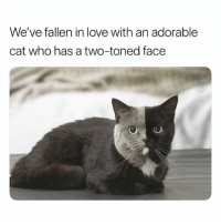 Stunning: We've fallen in love with an adorable  cat who has a two-toned face Stunning