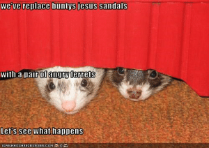 Jesus, Sandals, and Angry: we've replace buntys jesus sandals  with a pair of angry ferrets  Let's see what happens  ICANHASCHEE2EURGER COM  ANA we've replace buntys jesus sandals with a pair of angry ferrets ...