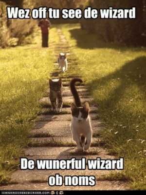 Lolcats - wizard of oz - LOL at Funny Cat Memes - Funny cat pictures ...: Wezoff tu see de wizard  De wunerfulwizard  obnoms  CANHASCHEE2EURGER cOM Lolcats - wizard of oz - LOL at Funny Cat Memes - Funny cat pictures ...