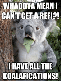 What's the deal, mate? Maybe he was dis-koalafied because he's been eating his house...  Don't get dis-koalafied. Get the 411 on today's refi rates at http://www.lender411.com/current-refinance-rates/.: WHADDYA MEAN  CAN'T GET AREFI?!  HAVEALL THE  KOALAFICATIONS! What's the deal, mate? Maybe he was dis-koalafied because he's been eating his house...  Don't get dis-koalafied. Get the 411 on today's refi rates at http://www.lender411.com/current-refinance-rates/.