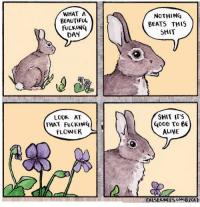 """Alive, Beautiful, and Fucking: WHAT A  BEAUTIFUL  FUCKING  DAY  NOTHING  BEATS THIS  SHIT  LOOK AT  THAT FUCKING  FLOWER  GooD To 6  ALIVE  FALSEKNE ES coM 0201 <p>Good morning, goddamnit via /r/wholesomememes <a href=""""https://ift.tt/2IeKQF7"""">https://ift.tt/2IeKQF7</a></p>"""