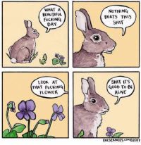 "Alive, Beautiful, and Fucking: WHAT A  BEAUTIFUL  FUCKING  DAY  NoTHING  BEATS THIS  SHIT  LOOK AT  THAT FuCKINQ  FLOWER  SHIT IT'S  GoOD To B  ALIVE  FALSEKNE ES com@2이' <p>Rabbit feels alive via /r/wholesomememes <a href=""https://ift.tt/2yb8WNm"">https://ift.tt/2yb8WNm</a></p>"