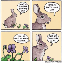 """Alive, Beautiful, and Fucking: WHAT A  BEAUTIFUL  FUCKING  DAY  NOTHING  BEATS THIS  SHIT  SHIT ITS  LOOK AT  THAT FuCKINQ  FLOWER  GooD To 6E  ALIVE  FALSEKNEES011 <p>What a great day to be alive via /r/wholesomememes <a href=""""https://ift.tt/2HnyXt6"""">https://ift.tt/2HnyXt6</a></p>"""