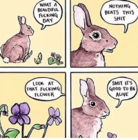 Alive, Beautiful, and Fucking: WHAT A  BEAUTIFUL  FUCKING  DAY  NOTHING  BEATS THIS  SHIT  SHIT ITS  LOOK AT  THAT FuCKING  FLOWER  G00D To BE  ALIVE Wise bunny via /r/wholesomememes http://bit.ly/2SlJsTj