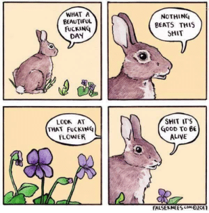 Alive, Beautiful, and Fucking: WHAT A  BEAUTIFUL  FUCKING  DAY  NOTHING  BEATS THIS  SHIT  SMIT ITS  LOOK AT  THAT FuCKINQ  FLOWER  GooD To eE  ALIVE  FALSEKNEES com 02or It's good to be alive