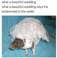Beautiful, Wedding, and Trendy: what a beautiful wedding  what a beautiful wedding says the  bridesmaid to the waiter 🐀 ( @th0tcouture )