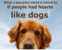 Truth. SHARE if you agree!  #Dogs #Love #Kindness #Happiness #Choosetheadoptionoption #RSPCA: What a beautiful world it would be  if people had hearts  like dogs Truth. SHARE if you agree!  #Dogs #Love #Kindness #Happiness #Choosetheadoptionoption #RSPCA