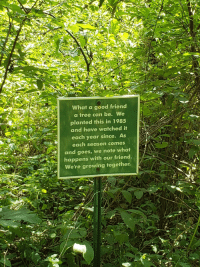 Good, Tree, and Wholesome: What a good friend  a tree can be. We  planted this in 1985  and have watched it  each year since. As  each season comes  and goes, we note what  happens with our friend.  We're growing together. Wholesome sign I found while hiking