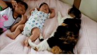 Cat, What, and Child
